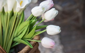 Picture basket, white, bouquet, tulips