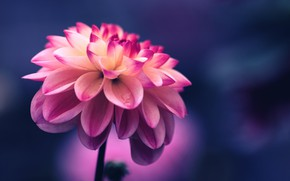 Picture Flower, Macro, Bud