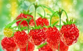 Picture nature, berries, strawberries, bokeh