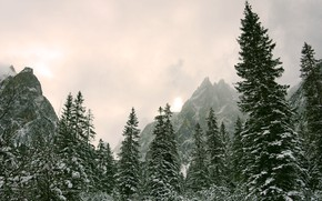 Picture winter, the sky, the sun, snow, trees, mountains, nature, overcast, rocks