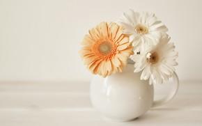 Picture bouquet, vase, gerbera, THE OFF