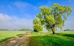 Picture road, greens, field, summer, the sky, clouds, the way, blue, tree, branch, spring, dal, crown, …
