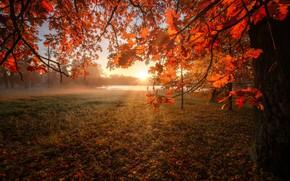 Picture autumn, the sun, rays, river, tree, dawn, foliage