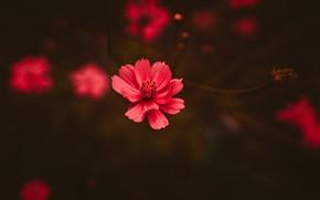 Picture Color, Flower, Plant, Plants, Flower, Flowers, Color, Flora, Plants, Close-up, Blooming, Bloom, Flora, Plant, by …