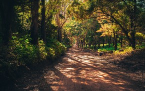 Picture road, forest, summer, trees, nature