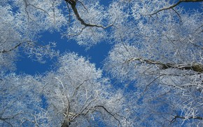 Picture winter, frost, trees, morning, frost, Meduzanol ©