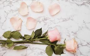 Picture flowers, roses, bouquet, petals, pink, flowers, petals, roses