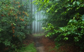 Picture forest, Germany, path, Magic forest