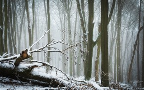 Picture winter, forest, snow, trees, Park, deadwood