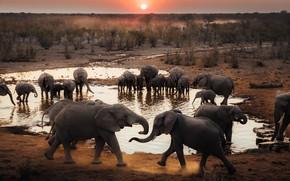 Picture elephant, pack, elephants, a lot