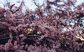 Picture Flowers, Nature, Leaves, Plant, Garden, Branch, Branches, Plants, Nature, Flowers, Color, Spring, Leaf, Flora, Leaves, …