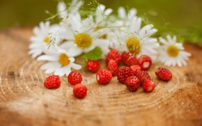Picture berries, chamomile, strawberries