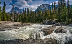 Picture forest, trees, mountains, river, Canada, Canada, British Columbia, British Columbia, Kicking Horse River, Yoho National …