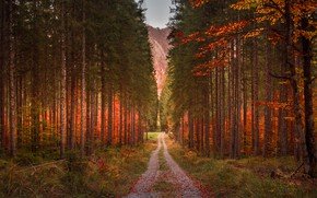 Picture road, forest, grass, leaves, trees, mountains, branches, nature, trunks, foliage, track, track, pine, path, forest, …