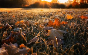 Picture autumn, grass, leaves, nature