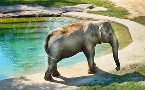 Picture water, light, stone, elephant, walk, pond, zoo