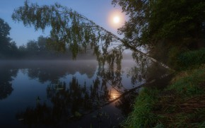 Picture the sun, river, morning, birch