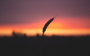 Picture Nature, Sunrise, Plant, Morning, Dawn, Silhouette, Plants, Nature, Horizon, Sunrise, Dawn, Morning, Flora, Plants, Flora, ...