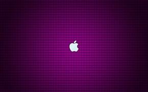 Wallpaper purple, background, apple, Apple, logo, logo, fon, violet