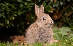 Picture grass, rabbit, bokeh