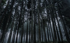 Picture forest, grass, trees, nature, fog, overcast