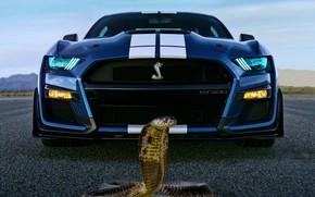 Picture background, fantasy, Cobra, ford
