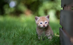 Picture grass, small, baby, red, kitty