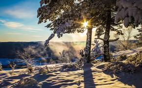 Picture winter, the sun, snow, tree