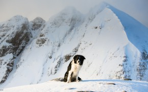 Picture cold, winter, snow, mountains, dog, the border collie, snowy peaks