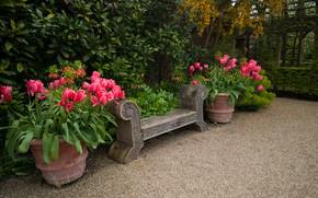 Picture greens, trees, flowers, Park, England, garden, shop, tulips, pots, the bushes, Arundel Castle Gardens