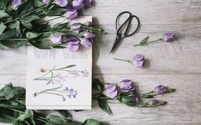 Picture bouquet, book, flower, decor, purple, book, Leaves, Decoration, Blossom, Eustoma