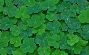 Picture leaves, carpet, plant, clover