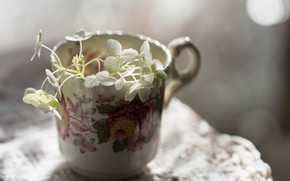 Picture white flowers, the mug on the table, blur bokeh