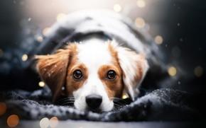 Picture winter, look, face, snow, portrait, dog, plaid, bokeh