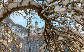 Picture winter, snow, landscape, mountains, branches, nature, castle, Germany, Bayern, Alps