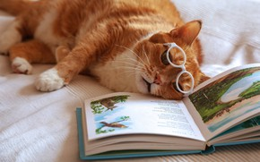 Wallpaper cat, red, glasses, tired, book