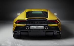 Picture Lamborghini, rear view, Huracan, 2020, RWD, Huracan Evo