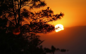 Picture the sun, sunset, mountains, tree