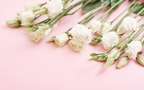 Picture background, pink, bouquet, white, eustoma