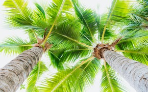 Picture summer, the sky, the sun, palm trees, summer, beach, paradise, palms, tropical