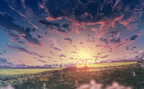 Picture field, the sky, sunset, flowers, nature