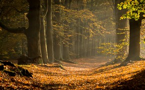 Picture autumn, forest, trees, nature, trail, sunlight