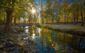 Picture trees, rays, autumn, stream