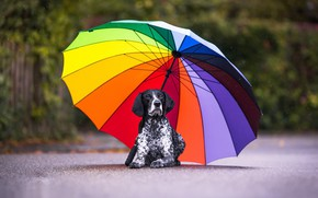 Picture each, dog, umbrella
