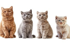 Picture cat, kitty, red