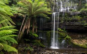 Picture water, waterfall, fern