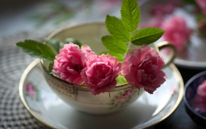 Picture leaves, light, flowers, table, background, roses, blur, mug, Cup, dishes, pink, still life, buds, saucer, ...