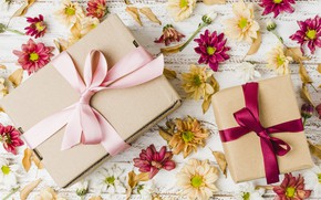 Picture flowers, gift, colorful, chrysanthemum, flowers, gift box