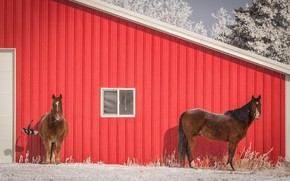 Picture winter, frost, roof, snow, trees, red, house, bird, two, horses, the door, horse, window, frost, …