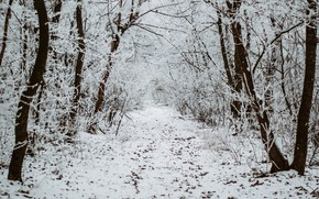 Picture winter, forest, snow, trees, nature, track, path